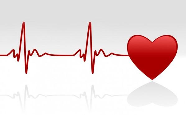 coraçao e sistema cardiovascular